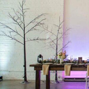 Birch Tree For Rent Toronto