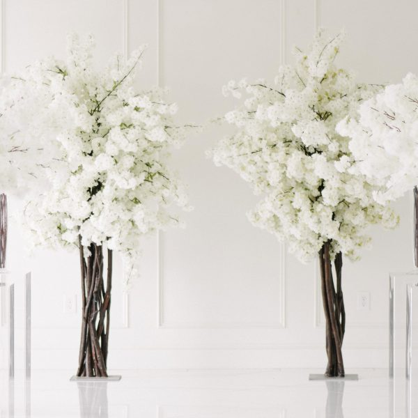 White Cherry Blossom Trees