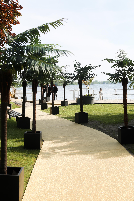 Palm Trees Rental Toronto