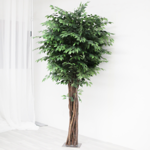 Greenery Tree Rental