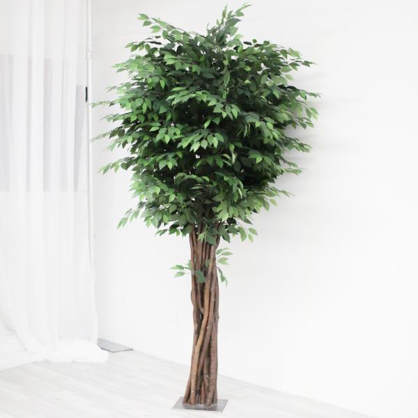 Greenery Tree Rental
