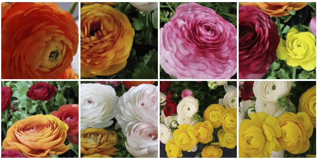 Fair Trade Floral